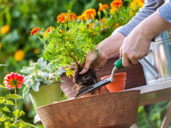 4 saveta za uređenje vašeg vrta